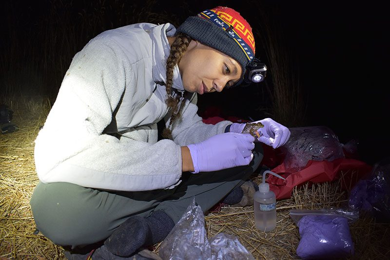 Imani Russell taking tissue samples from a frog.