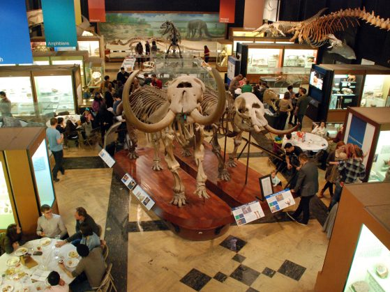 A bird's eye view of the party at the Museum of Natural History among the mastodons.