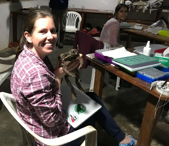 Joanna Larson holding a cane toad at Los Amigos Field Station in southern Peru. Image: Alison Davis Rabosky