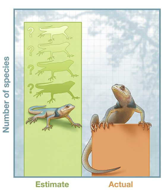 Blurred species boundaries lead genomic approaches to overestimate the actual number of species. Illustration credit: John Megahan