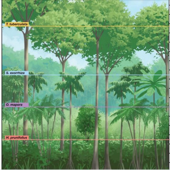 Height layers. Visual representation of the forest on Barro Colorado Island, highlighting the four height-based groups identified by our metric.