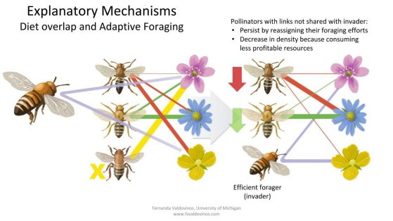 Explanatory mechanisms: diet overlap and adaptive foraging. Image: John Megahan.