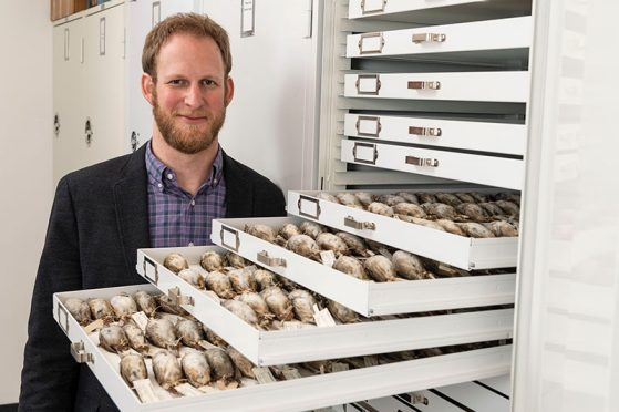 University of Michigan evolutionary biologist Benjamin Winger with some of the migratory songbirds used in a large study of avian responses to climate warming. Photo by Roger Hart/University of Michigan Photography.