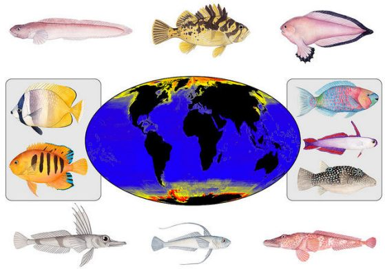 Map shows species-formation rates for marine fish groups at a global scale.