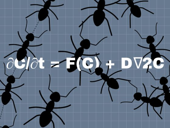 Illustration of ants on top of the Turing equation. Image: Chloe Oliva