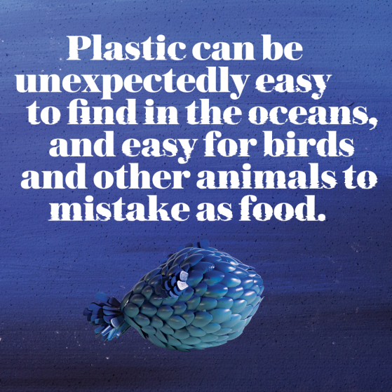 Plastic can be unexpectedly easy to find in the oceans, and easy for birds and other animals to mistake as food.