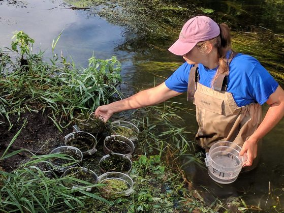 Erin Eberhard wears brown waders and stands waist high in water while collecting samples and sorting them into small bowls that appear to float on the water's surface.