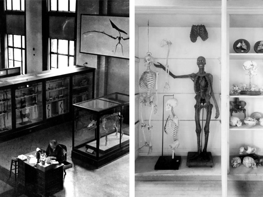 items from the museum of natural history, including an aerial shot of a dinosaur skeleton, a human skeleton, and shelves with several human skulls
