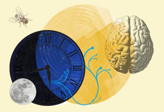An illustrated design with a small moon, a large clock, a larger sun, and a brain.