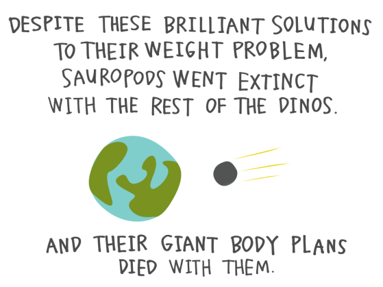 Despite these brilliant solutions to their weight problem, sauropods went extinct with the rest of the dinos. And their giant body plans died with them.