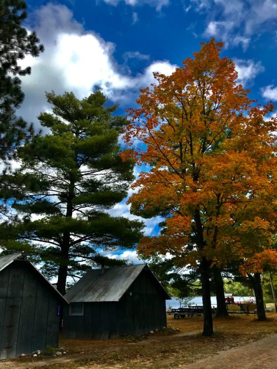 Two cabins on the lake at UMBS in the fall. One of the trees has turned orange. The lake sits behind the cabins,