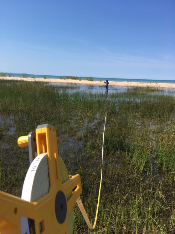 A yellow measuring tape extends the length of the photo to measure the width of a swale, a low tract of marshy land, on the dunes that border the beach at Pointe Aux Chenes