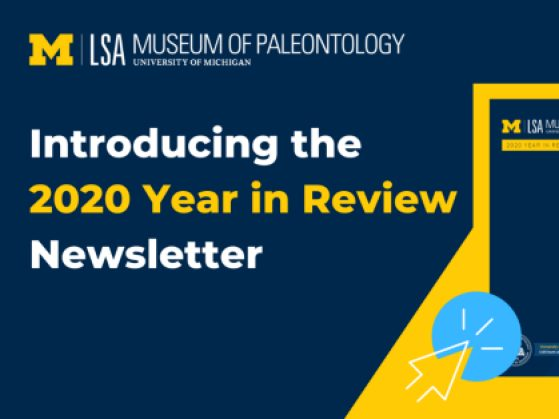 Ad for 2020 Year in Review Newsletter