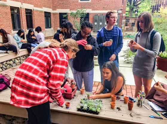 students potting small succulent plants in East Quad Garden
