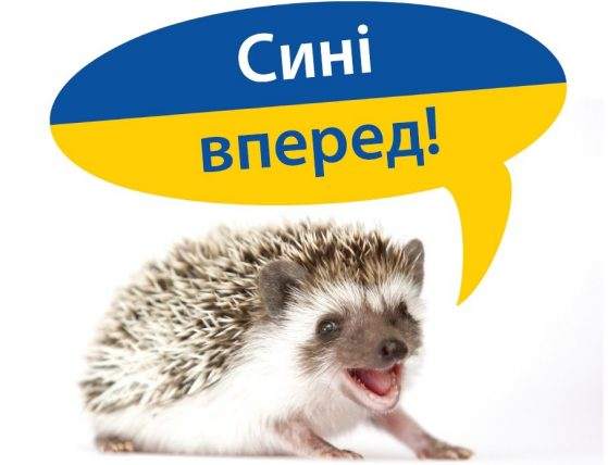 Ukrainian Hedgehog Go Blue!