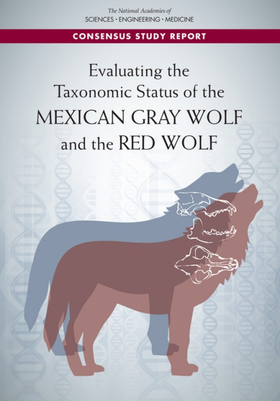 "Cover of the report, Evaluating the Taxonomic Status of the Mexican Gray Wolf and the Red Wolf"" with wolf outlined on cover, DNA strands in background"