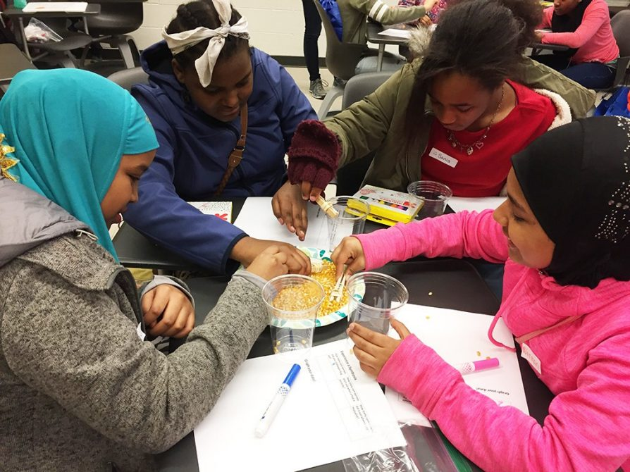 Students take part in Friends and Foes in Nature, an ecology activity in the Duffy Lab to learn about symbionts.