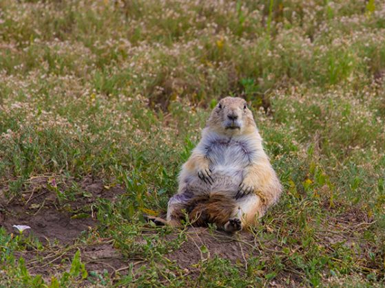 Honorable Mention: Prairie Dog's Day of Zen Meditation by Chuan Li. Badlands National Park, South Dakota, USA.