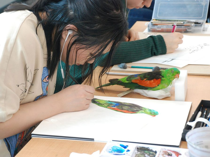 Iris Sun selected the parrot because she wanted to paint its beautiful colors.