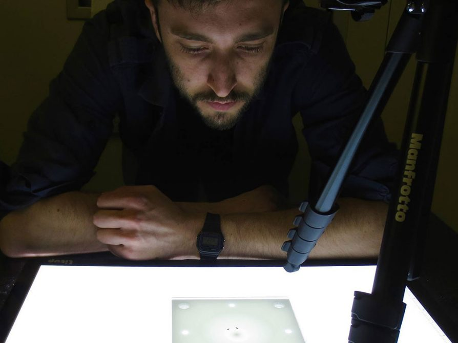 Jon Massey observes behavior in one of the fly species (Drosophila elegans) that he studies. He recorded some 700 videos (about 350 hours of video data) for this project.