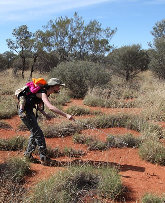 Alison Davis Rabosky, with daughter Maya on her back, catching a Ctenophorus isolepis lizard in Western Australia.