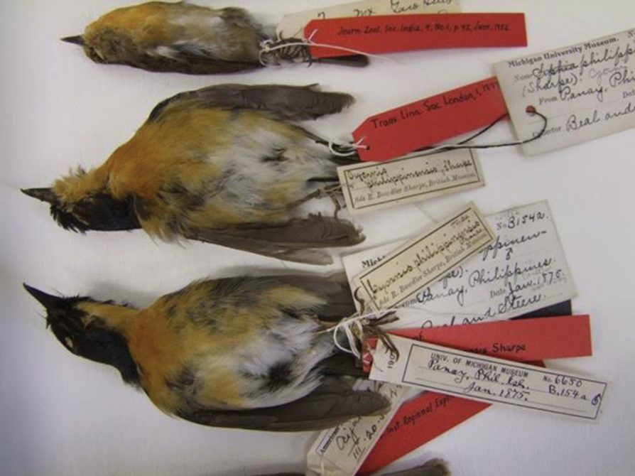 specimens from Kerstin Barndt's research
