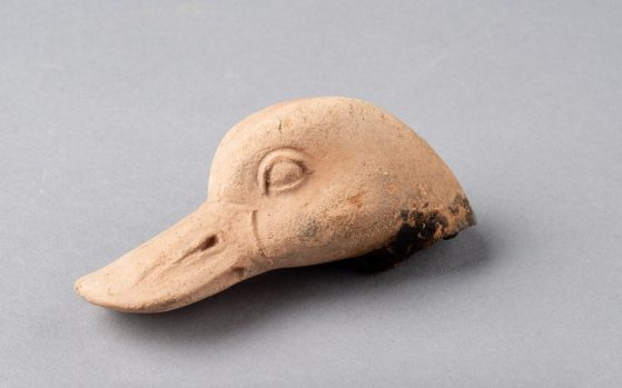 Head of a duck