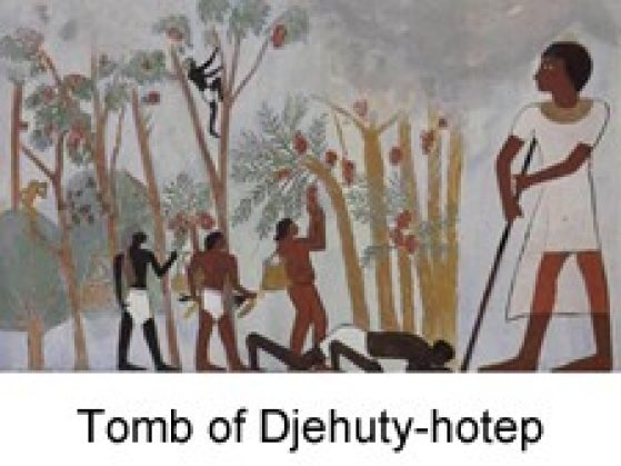 Tomb of Djehuti-hotep