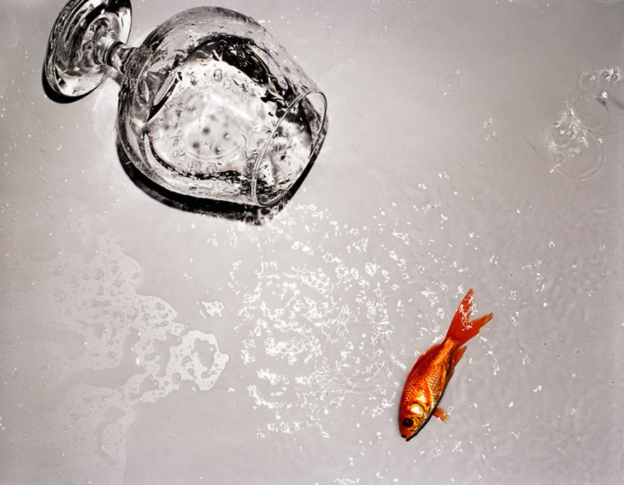 A water glass with a goldfish knocked over