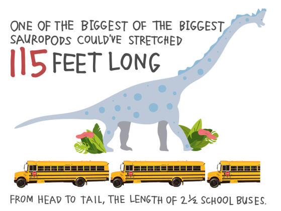 One of the biggest of the biggest sauropods could've stretched 115 feet long, from head to tail, the length of 2 ½ school buses.