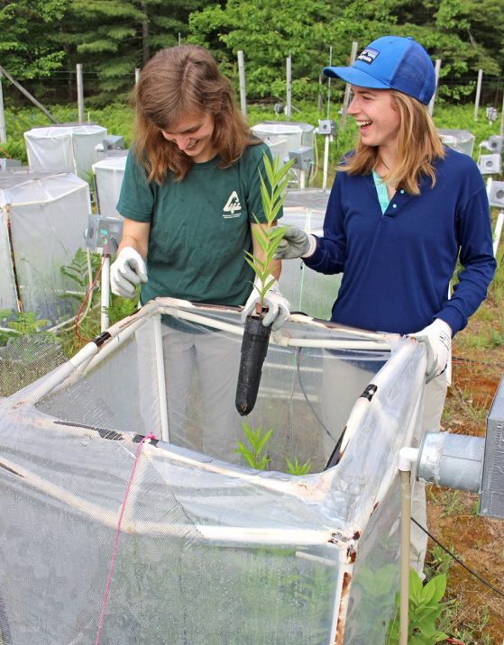 Two women stand above a plastic cube made of OVC pipe covered in plastic sheeting, holding plants.